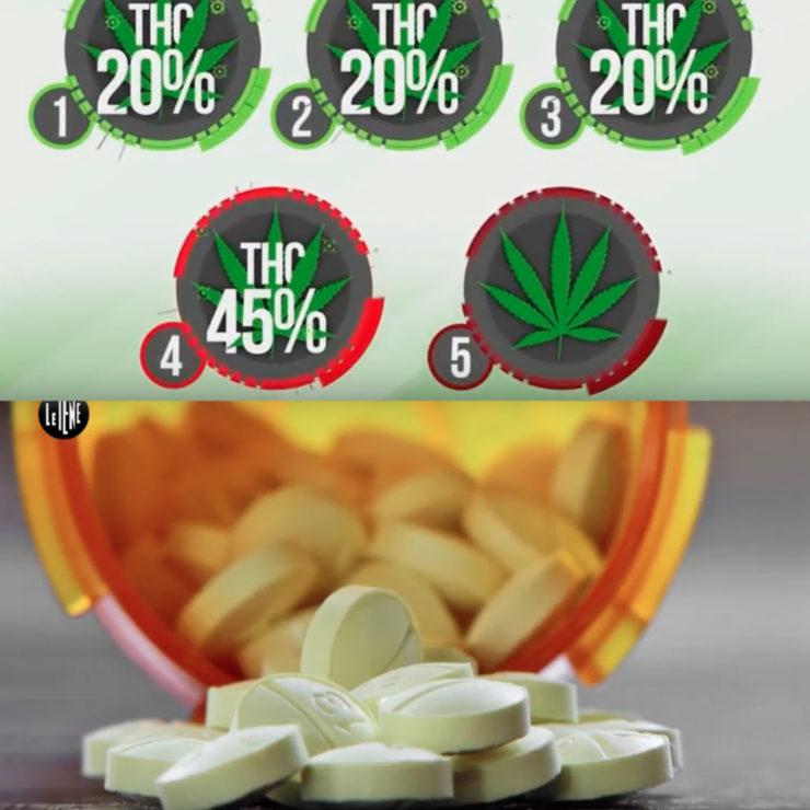Centro Narconon Piemonte: psicofarmaci, medicinali, marijuana, hashish